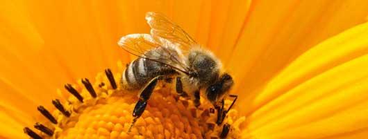 Bienentrachtpflanzen