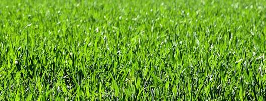 Grassen & Grasachtigen