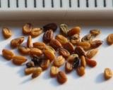 Lepidium meyenii, Maca